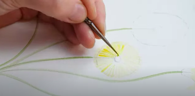 Painting watercolour dandelions