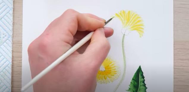 painting half open dandelions